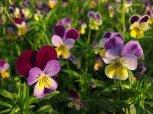 projekty ogrodów warszawa